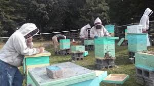 Coal Miners Train As Beekeepers To Earn Extra Cash